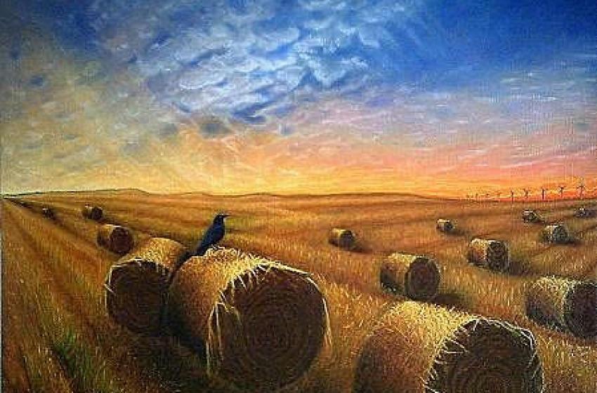 Soldi per vivere nei campi