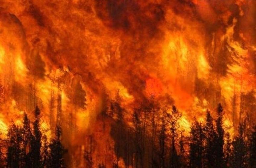 A fuoco mezzo ettaro boschivo nel Comune di Pizzoli
