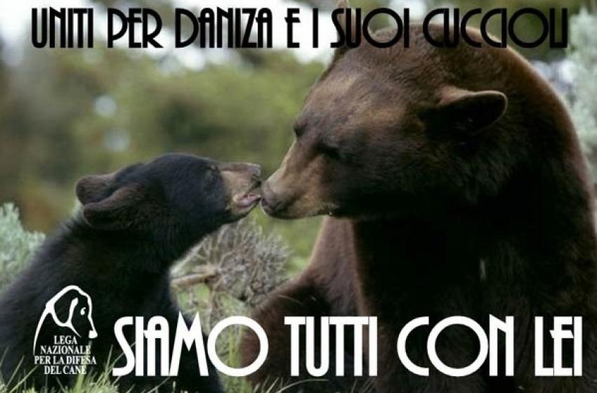 La storia dell'orsa Daniza indigna e fa il giro del mondo