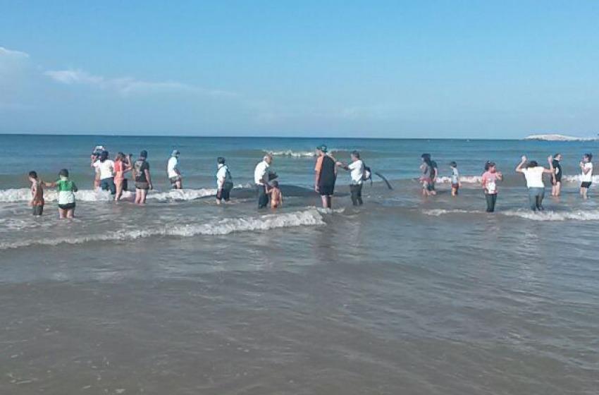 Spiaggiamento capodogli a Vasto, fu colpa dello stress