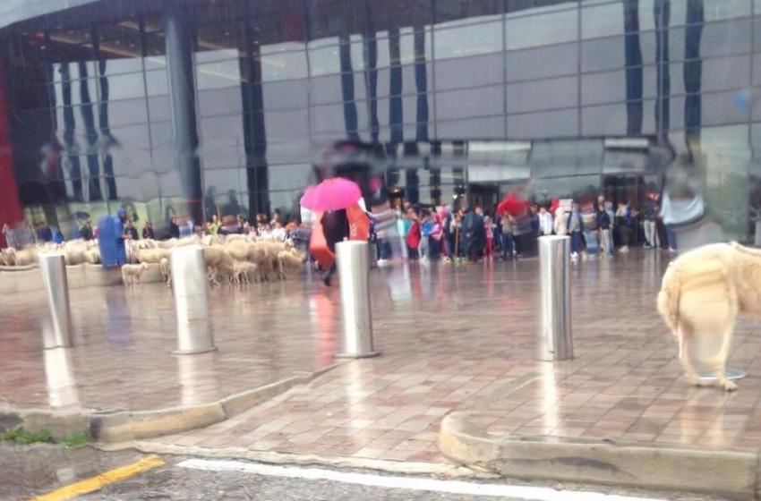 Chieti. Al centro commerciale Megalò arrivano anche le pecore