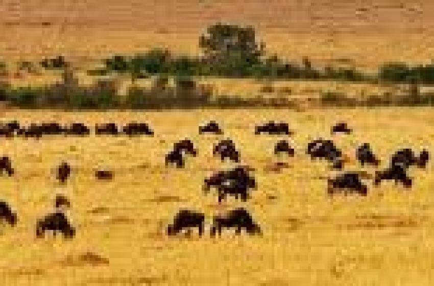 Incidente durante safari. Orafa vastese muore in Kenya