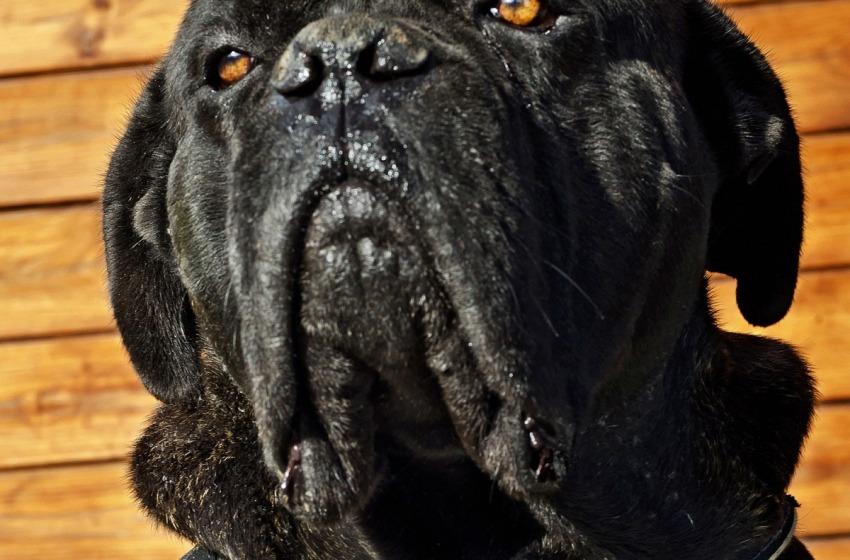 """Wwf: """"Abrogare la legge sui cani nelle aree protette"""""""