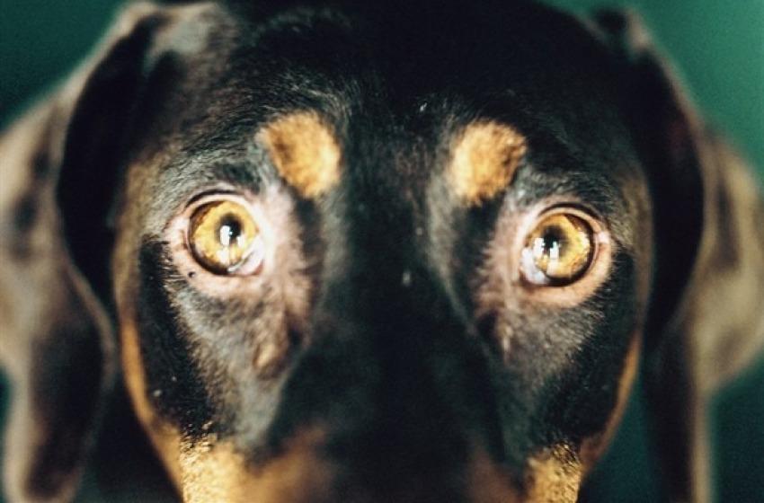Orrore a Balsorano (Aq): cuccioli gettati nel dirupo come a Sparta