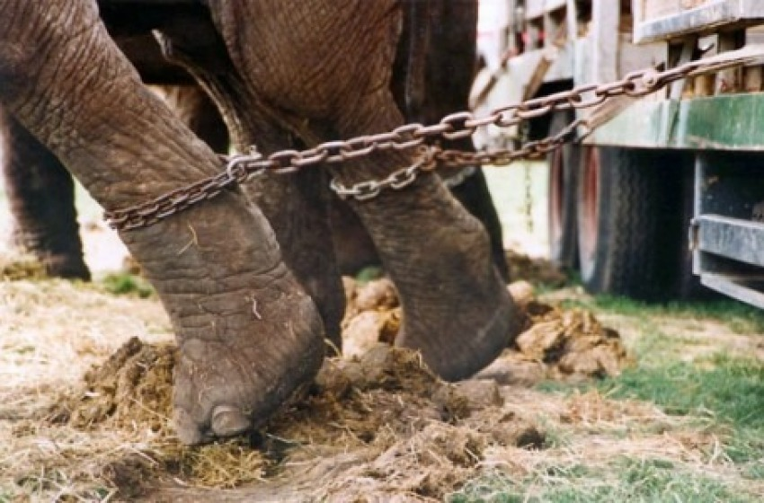 Finanziamento pubblico dei circhi con animali, la Lav dice no