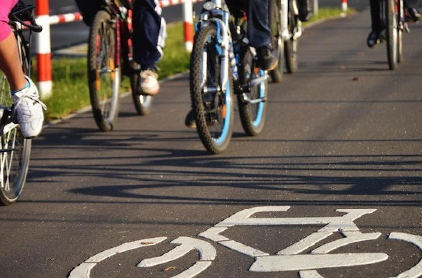 Giulianova: pini abbattuti per la pista ciclabile, il sindaco ironizza