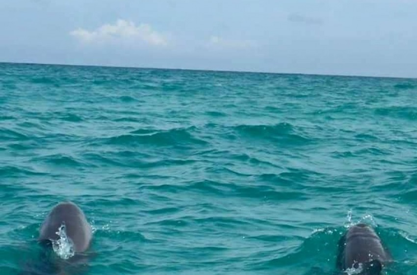 Delfini, balene e tartarughe di mare, l'Adriatico è il nostro oro reale
