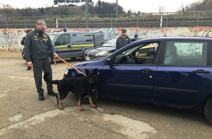 L'infallibile fiuto di Horst, il cane antidroga della Finanza di Ortona