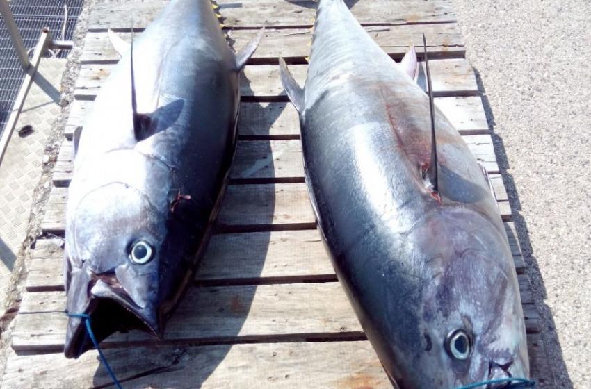 Pesca clandestina di tonno rosso. Maxi multe da 10mila euro