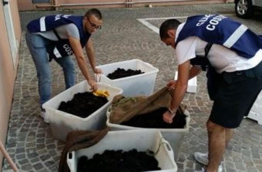 Pesca di frodo a Vasto. Sequestrati millecinquecento ricci di mare