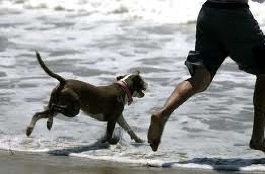 Cani in spiaggia: a Pescara due zone dedicate nelle spiagge libere