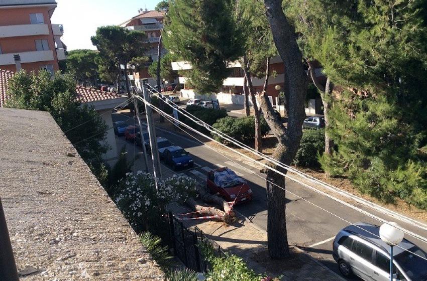 Tragedia sfiorata alla Pineta di Pescara. Alberi secchi sui marciapiedi