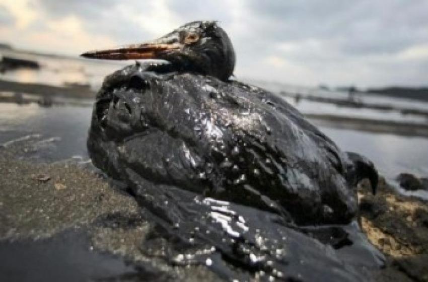 Referendum per fermare la deriva petrolifera verso il flop