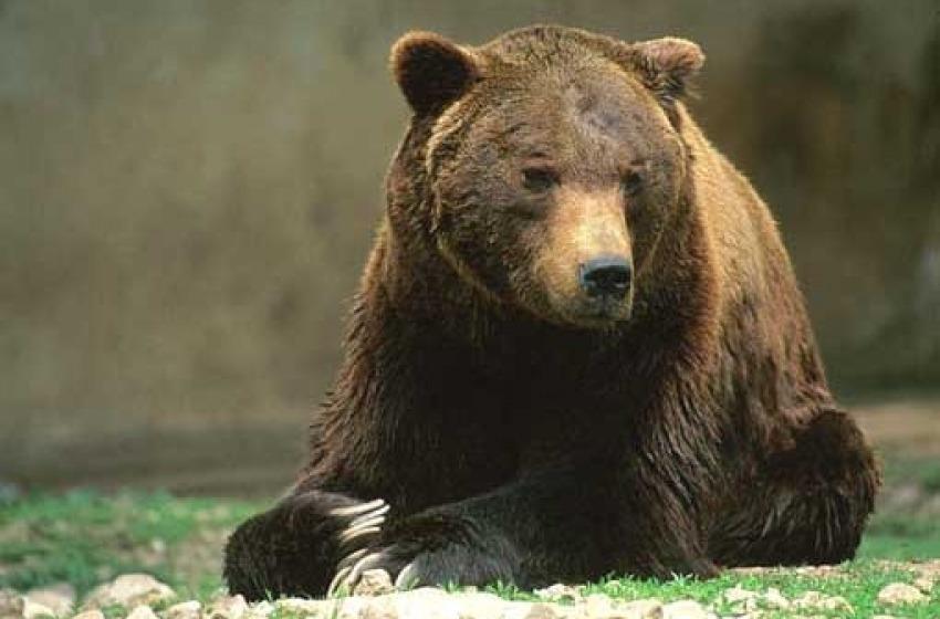 E' morto l'orso Sandrino! Un pezzo di storia del Parco che se ne va