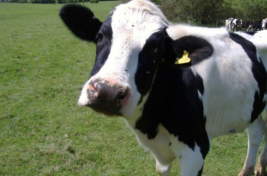 """La """"guerra del latte"""" arriva anche in Abruzzo"""