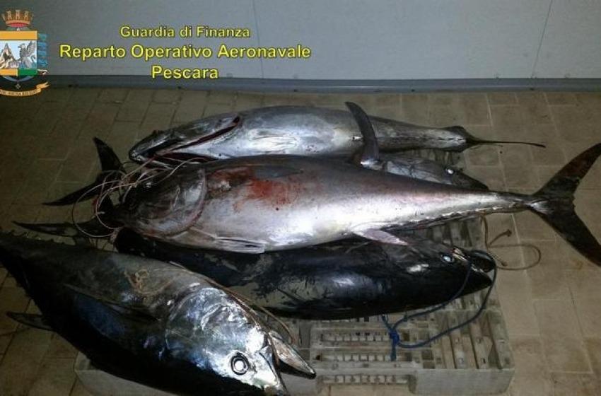 Pescara, sequestrati tonni rossi pescati di frodo