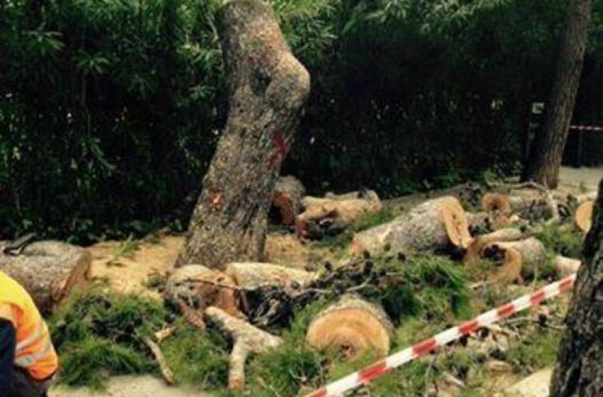 Addio agli alberi in Viale dei Pini. Il Tar Abruzzo dà ragione al Comune di Pescara