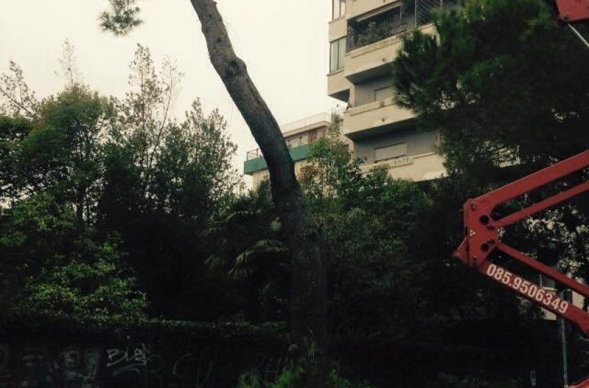 La Soprintendenza Belle Arti e Paesaggio ritorna sul taglio dei pini in viale Regina Margherita