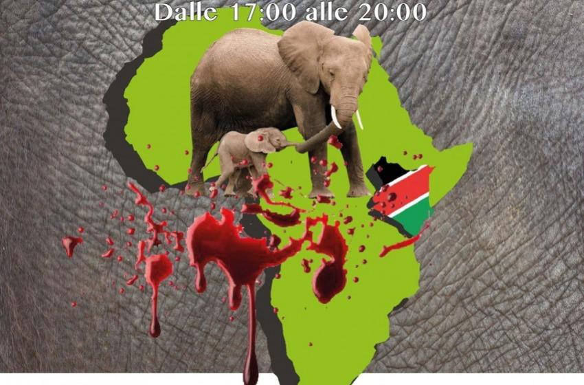 Dobbiamo salvare i nostri fratelli elefanti. E dobbiamo farlo ora