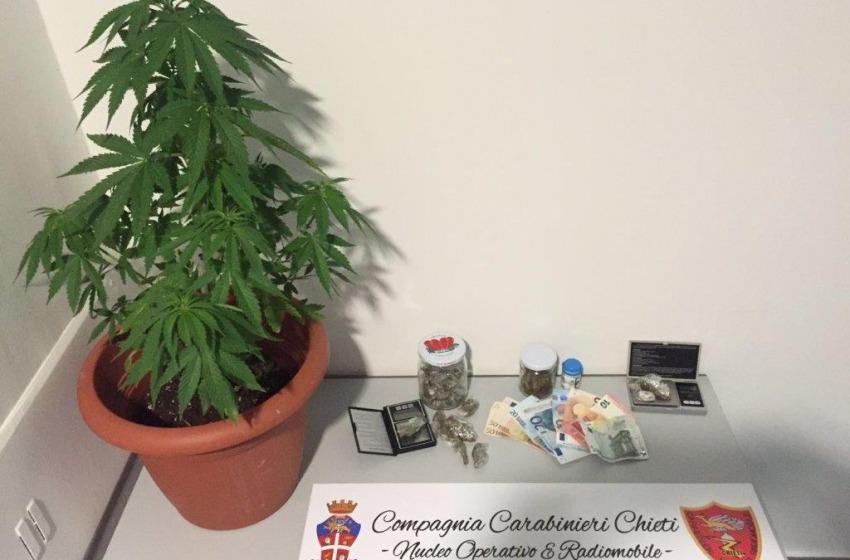 Arrotondava spacciando marijuana, studente fuori sede arrestato dai Carabinieri