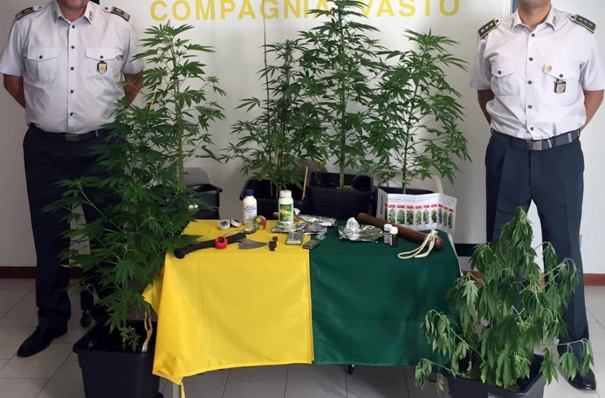 San Salvo: coltivava marijuana da spaccio sul balcone di casa, denunciato insieme al 'palo'