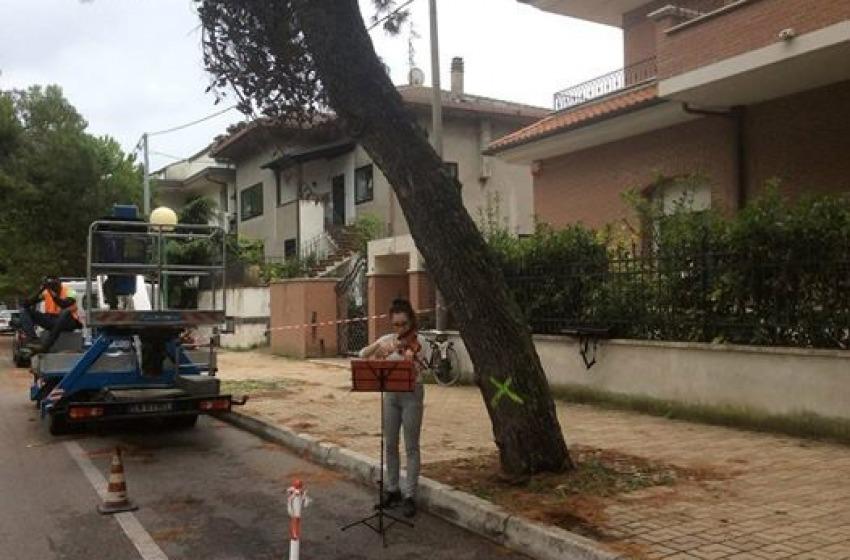 Mentre in via Scarfoglio si suona, la giunta dice Sì alla ripiantumazione di 250 alberi