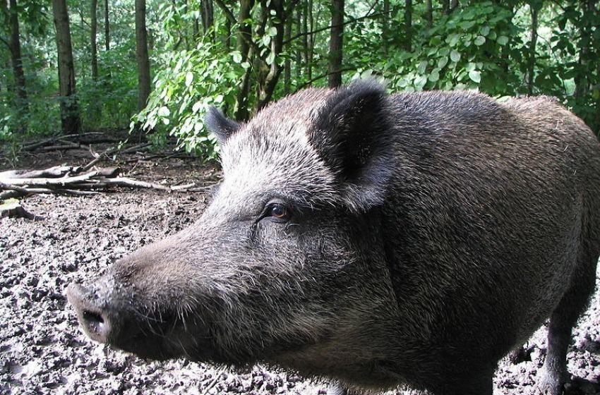 Fauna selvatica, Di Zio lancia l'allarme per strade e campi