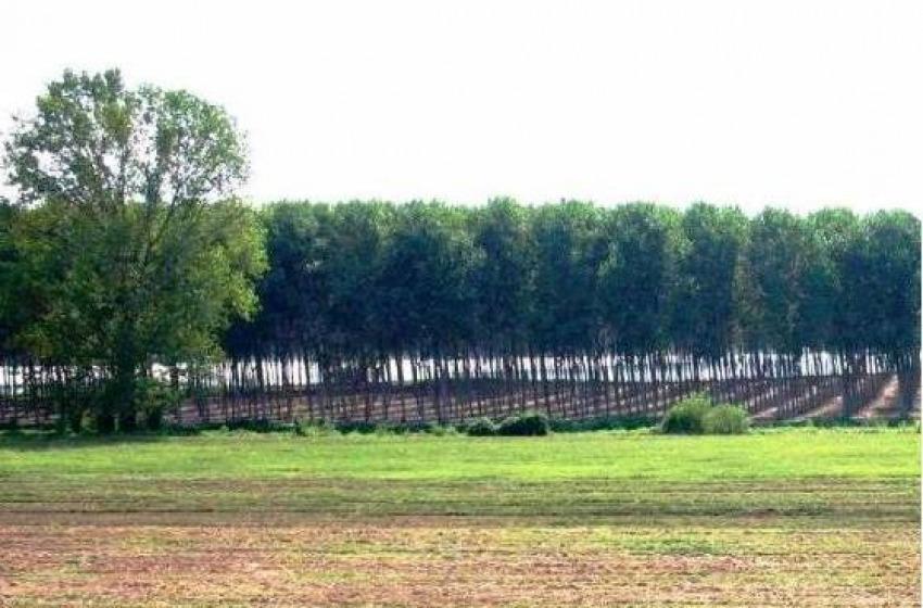 Terrevive: online gli elenchi dei terreni agricoli in vendita o in affitto nel 2017