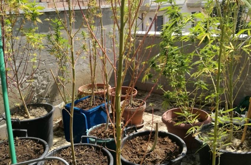 Coltivava marijuana sulla terrazza dell'attico mansarda, pescarese nei guai