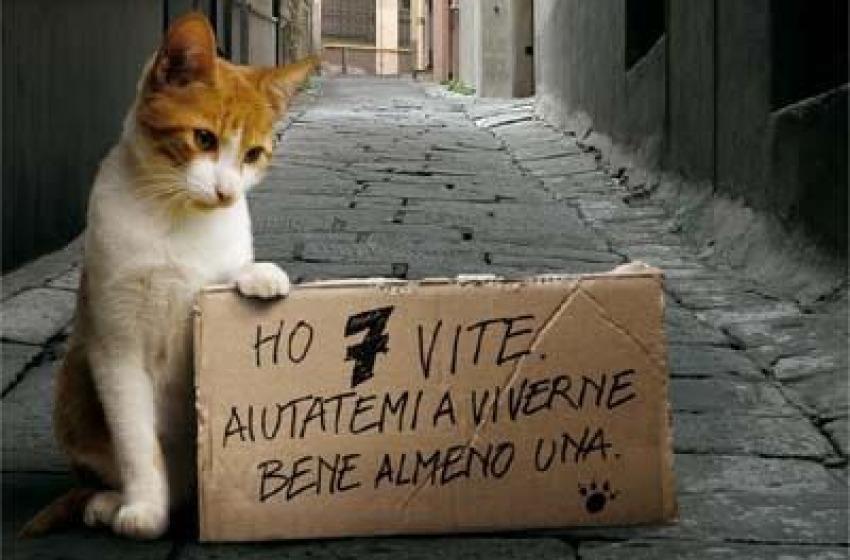 Un gattile per Chieti