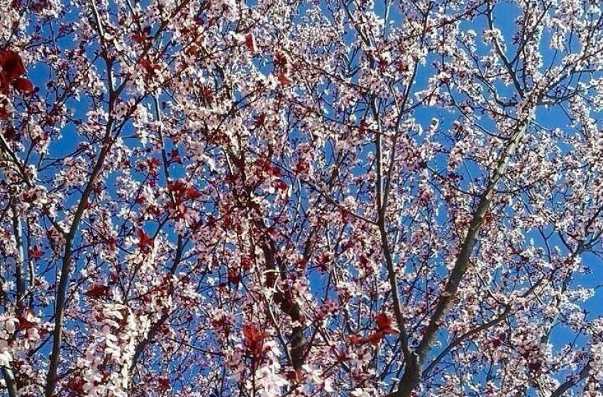 Benvenuta primavera, mentre la neve non molla