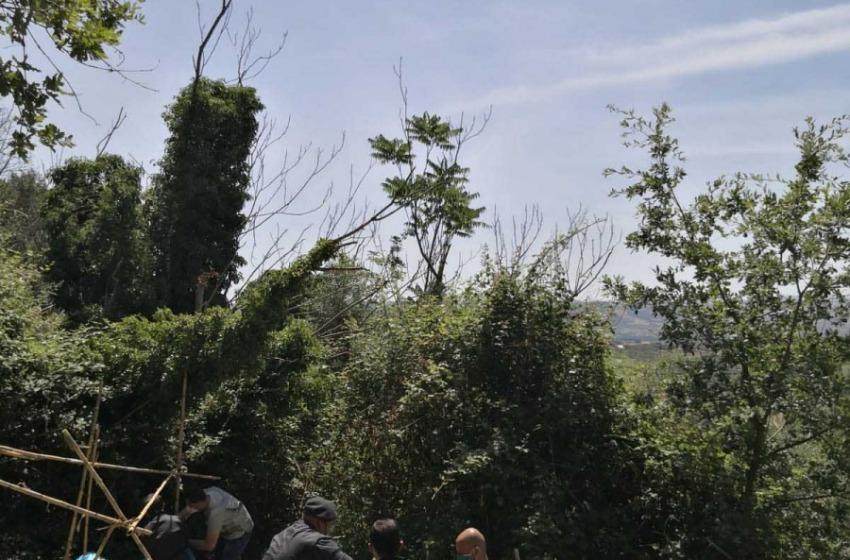 Lanciano: sequestrate dalla Guardia di Finanza 170 piante di marijuana