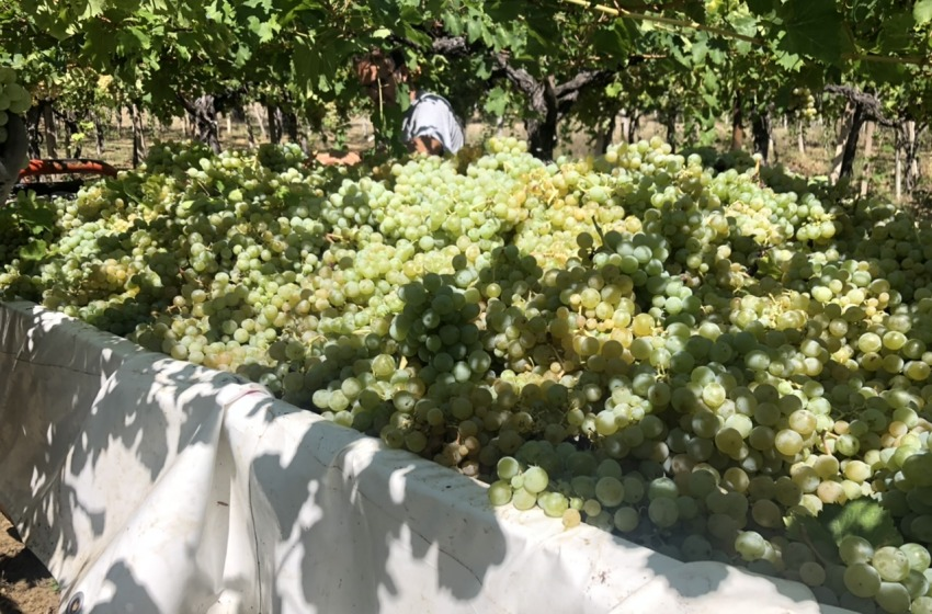 Vini italiani da record: l'export a quota 12 miliardi