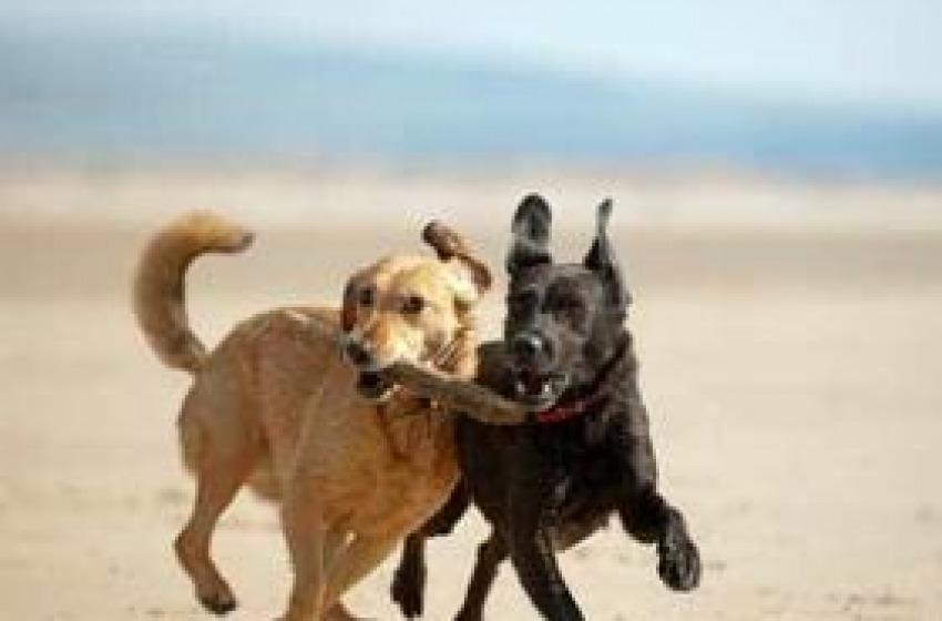 Una spiaggia per i cani