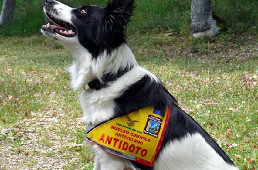 Cani antiveleno sulle Dolomiti