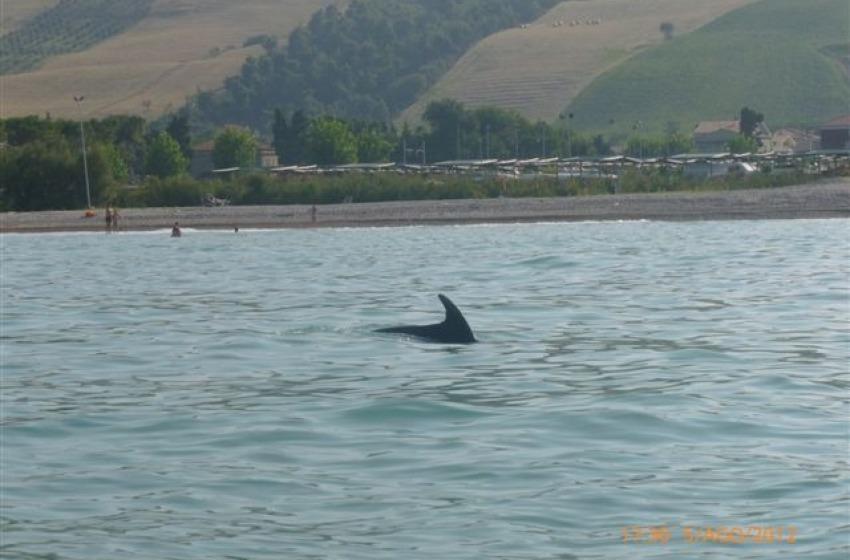 D'estate si vedono i delfini