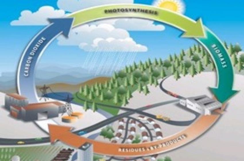 Biomasse. Dieci quesiti