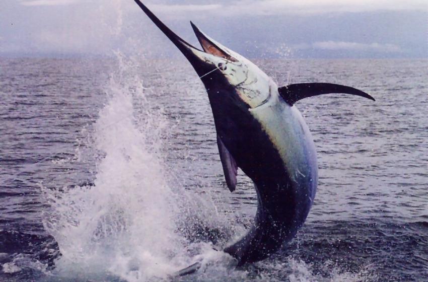 Stop al pesce spada (per poco)