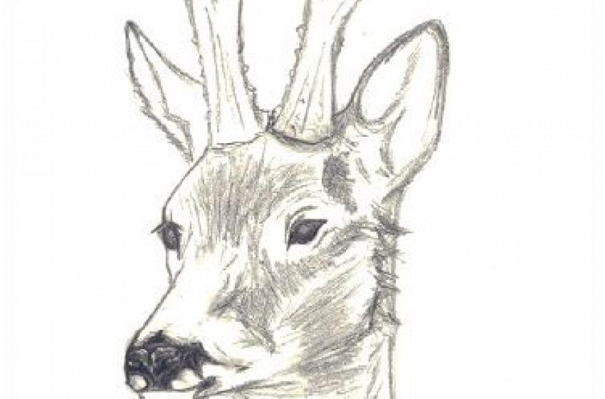 Chi(odi) vuole uccidere Bambi?