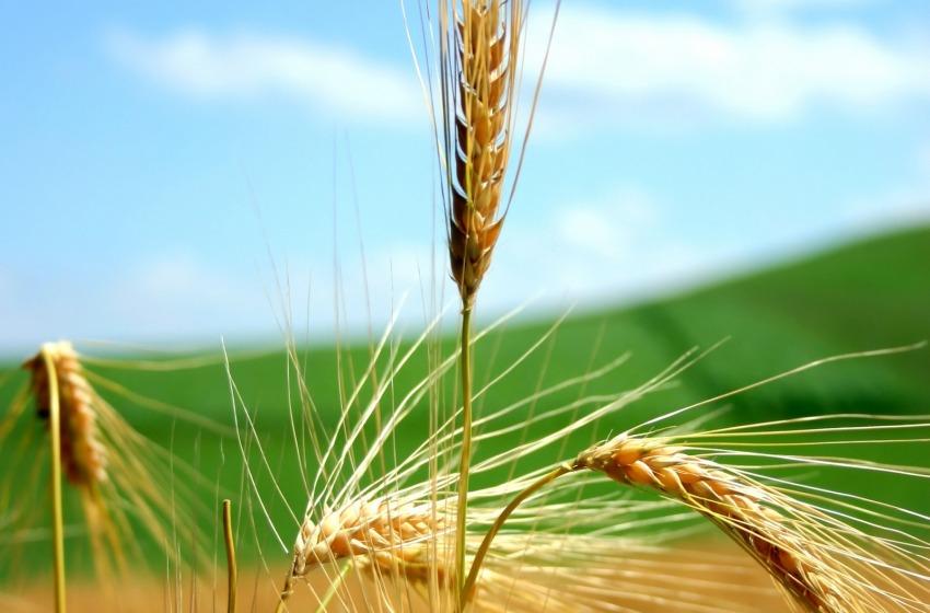L'agricoltura si fa social