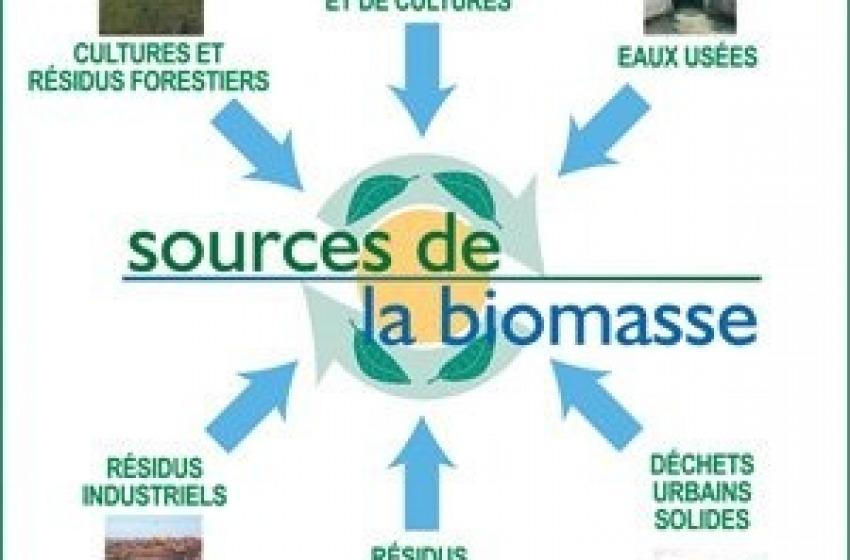 Cepagatti. Pasticcio Biomasse