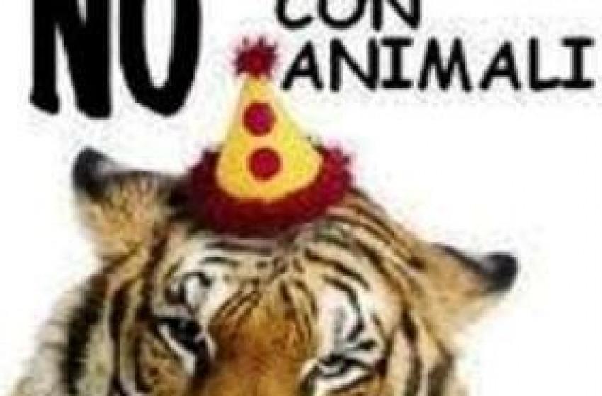 Perchè quegli animali?