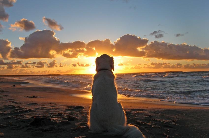 Coi cani al mare (la petizione)