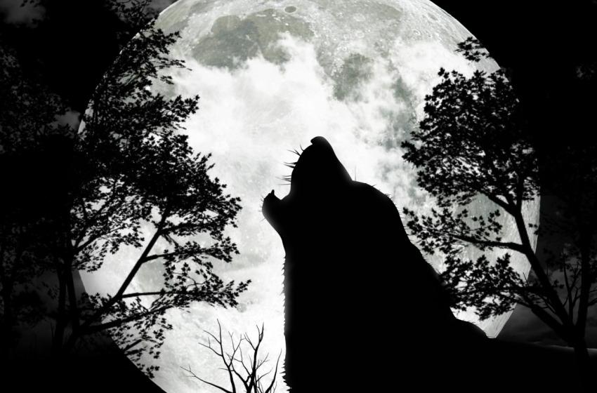 Ucciso un lupo nel Parco