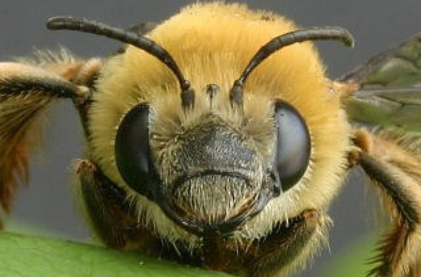 Allarme api, scuola chiusa
