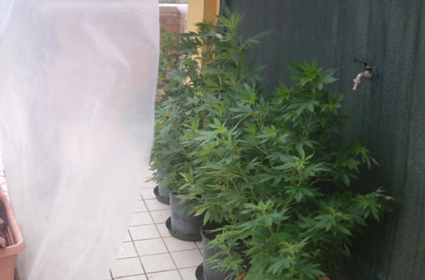 Coltivava marijuana sul balcone di casa. Arrestato