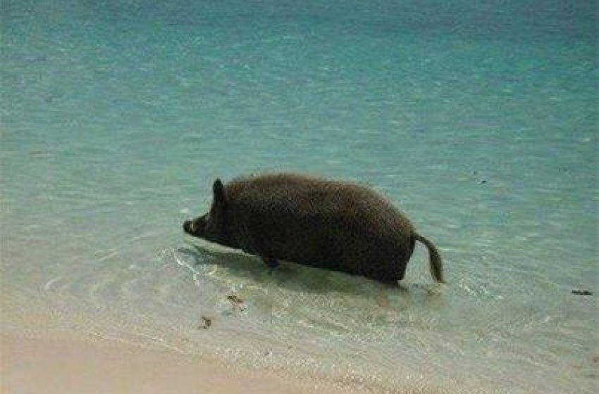 Bagno al mare e lunga passeggiata in spiaggia da chinghiale