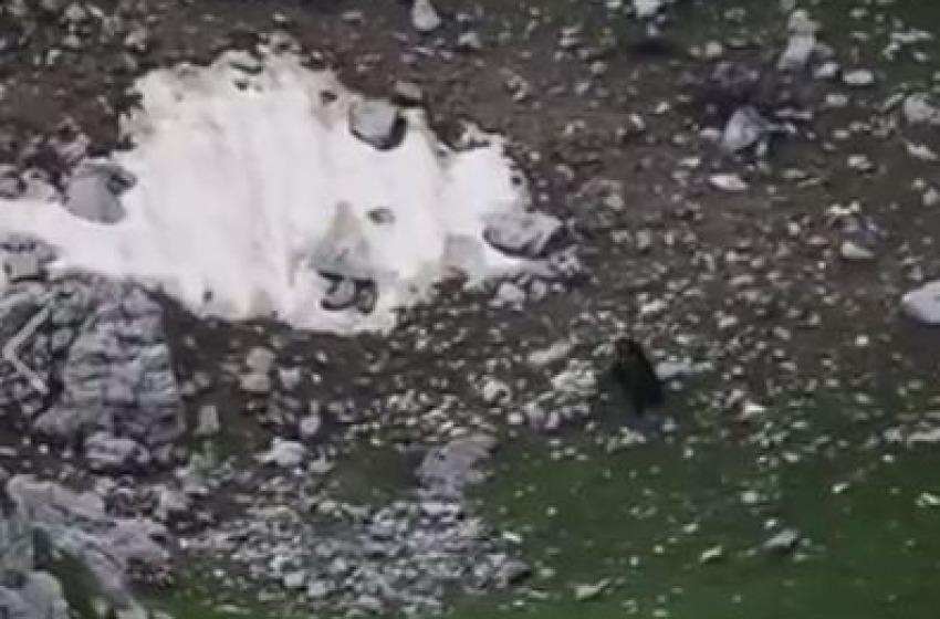 Faccia a faccia tra il lupo e l'orso marsicano